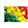寿光蔬菜种子 五彩椒F1优质彩椒种子 甜椒种子 辣椒种子 传统品种